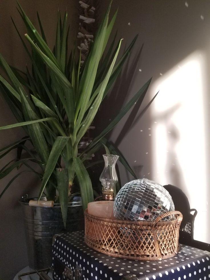 #saltlamp #houseplant #boho #decor #discoball