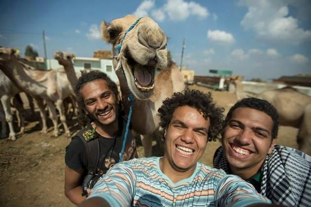 Los camellos más divertidos de las redes sociales   https://mx.noticias.yahoo.com/fotos/los-camellos-m%C3%A1s-divertidos-de-las-redes-sociales-1412804289-slideshow/camellos-photo-1412696259458.html