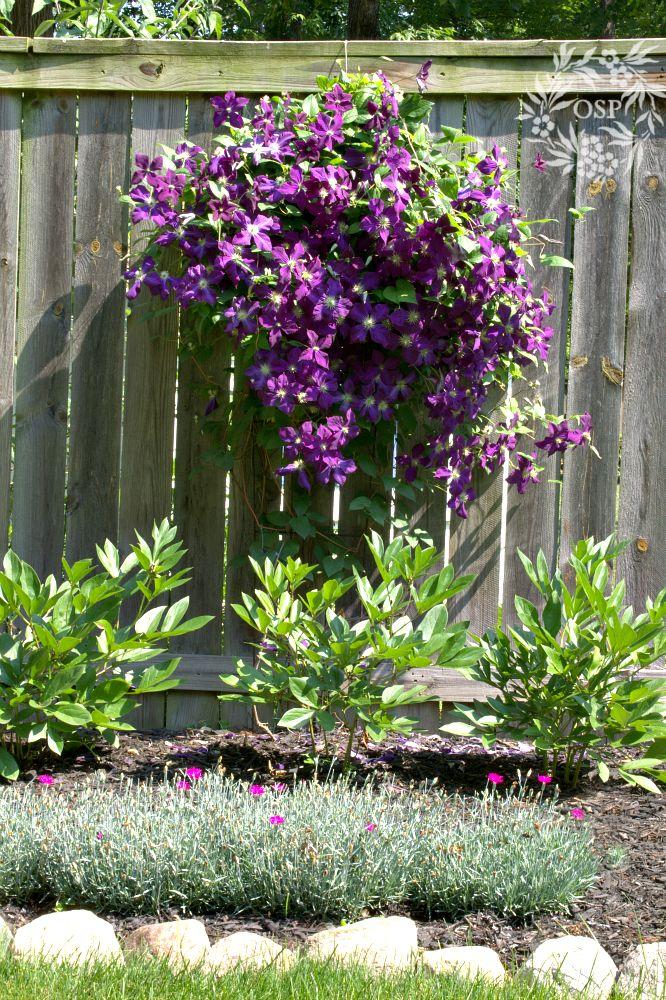 136 best borders images on pinterest gardening for Perennial wood