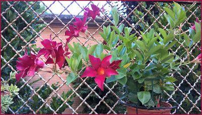 il mio mondo: I fiori del cortile di casa