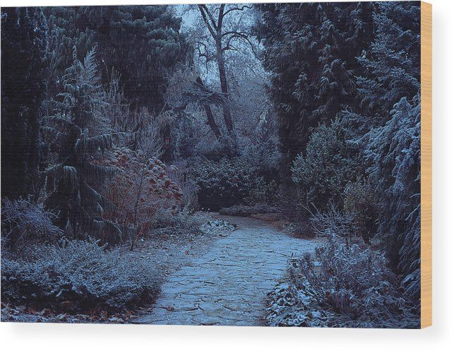 Jenny Rainbow Fine Art Photography Wood Print featuring the photograph Moonlight Pathway. Enchanted Winter Garden by Jenny Rainbow