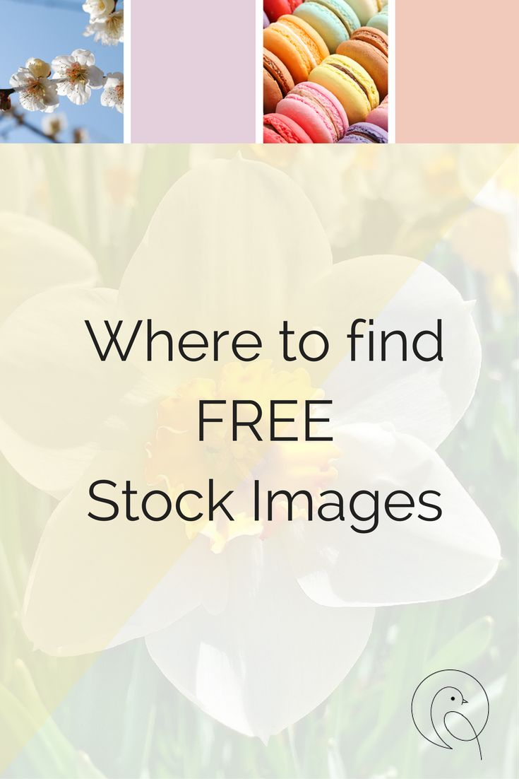 Free Stock Images - Beautiful photos for every need via @Vireo Media | Website Design and Social Media for Small Businesses