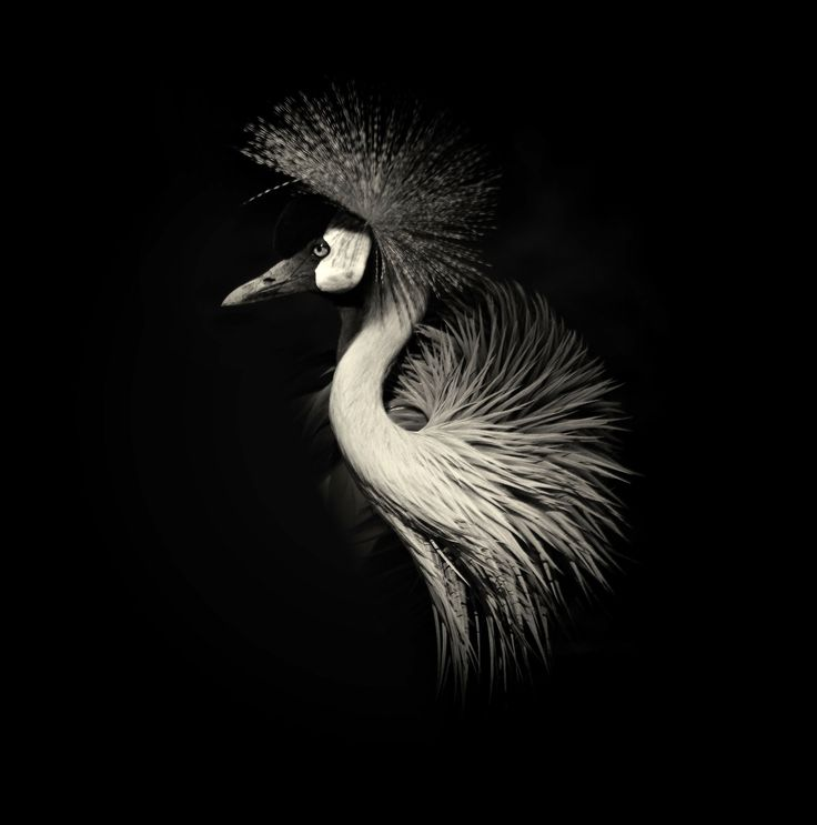 Best Alex Stephen Teuscher Lucas Holas Black White - Breathtaking black and white animal portraits by lukas holas