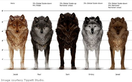Werewolf Twilight Pack The Wolfpack - who's w...