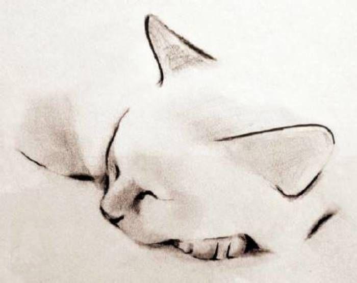 Las obras de Kellas Campbell pintor, actitud del gato - perezosos, unos bolígrafos, magnífico!  (Bosquejo, arte, pintura, arte, pinturas simples)