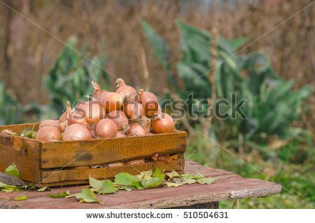 Onions in a box on a wooden background.