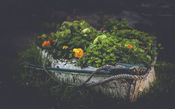 Scarica sfondi bella aiuola, progettazione del paesaggio, fiori selvatici, aiuola con fiori, piante verdi