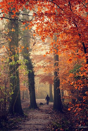 Autumn walk, Vosbergen estate, Eelde, The Netherlands