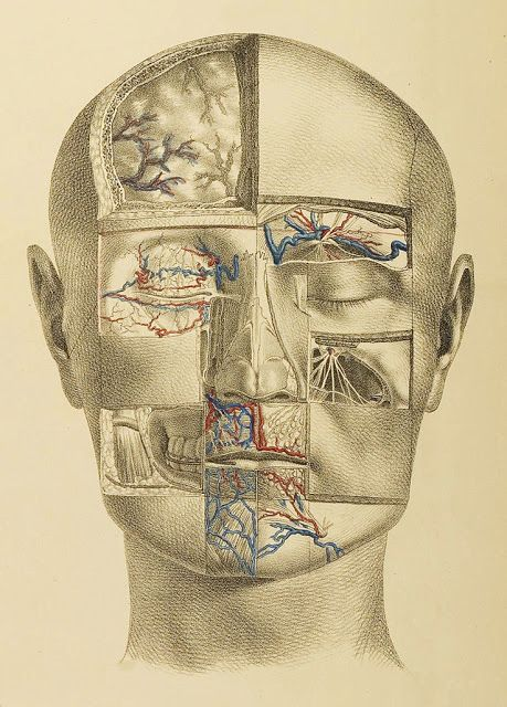 Nuhn, Anton Surgical-anatomical plates (Division 1)- Illustrations of the surgical anatomy of the head and neck including Mannheim, 1846