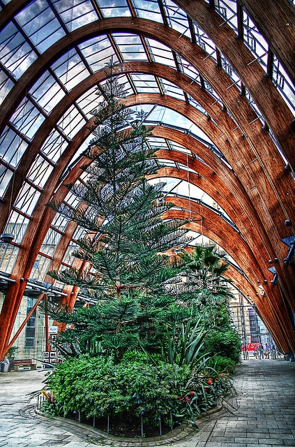 Sheffield, England - Winter Gardens #socialsheffield #sheffield