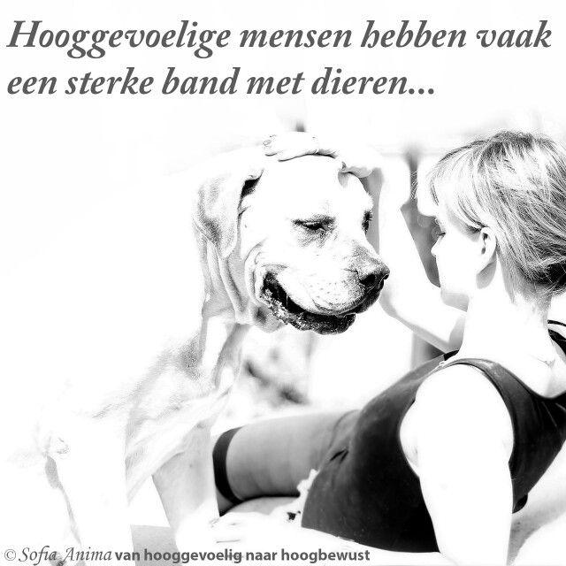 Hooggevoelige mensen hebben vaak een sterke band met dieren...Sofia Anima, praktijk voor hooggevoelige mensen. www.sofia-anima.nl #hsp