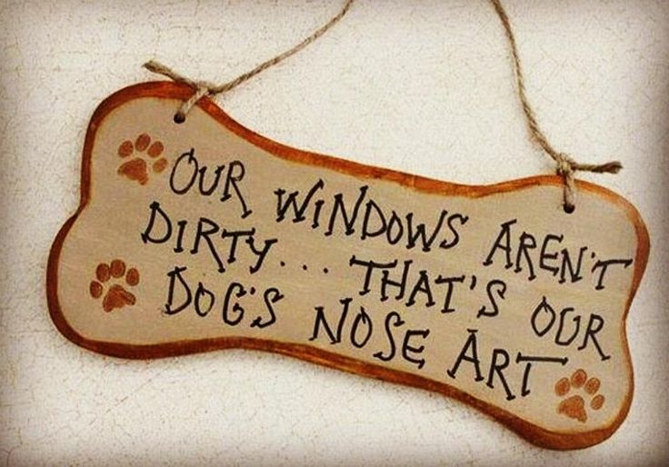Good morning!!!!  #bossòst  #valdaran #pirineus #pyrenees #igersaran #linux #linux_the_wolfdog #husky #huskygram #huskylove  #thehuskylove_feature #photooftheday #cute #pets #instagood #animales #love #nature #animallovers #dogsofinstagram #pets_of_instagram #petstagram #petsagram by linux_the_wolfdog