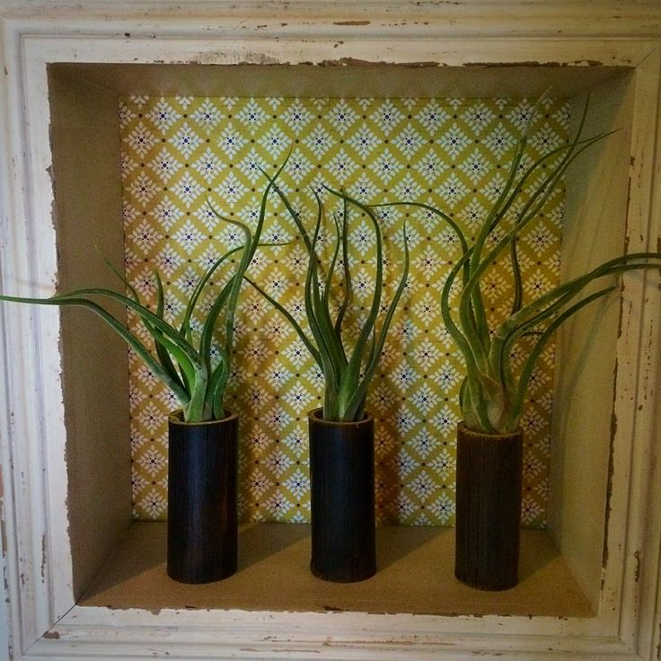 Bamboo Planters with Caput-Medusae #airplants #tillandsia #planters #airplantdesigns #bamboo