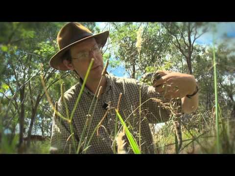 The Eastern Blue Tongue lizard - with Dr Dave - YouTube