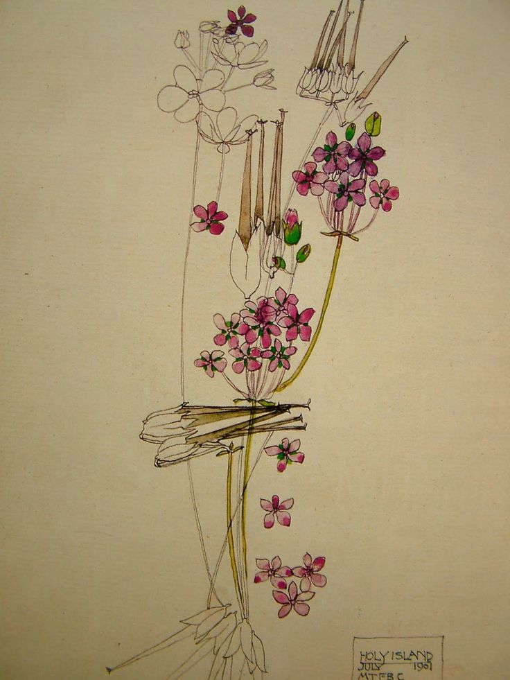 a biography of charles rennie mackintosh Charles rennie mackintosh signed a number of remarkable watercolours mainly painted in england and france in the last years of his life.