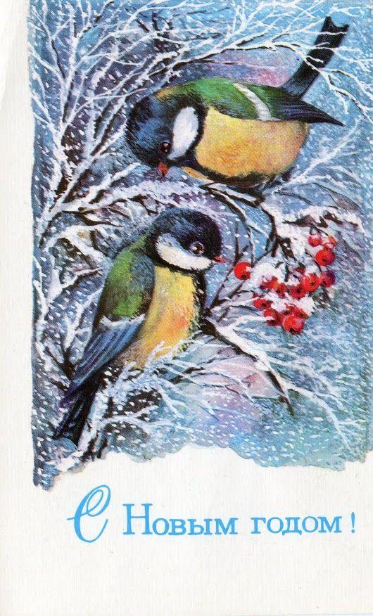 Картинки, открытка синицы