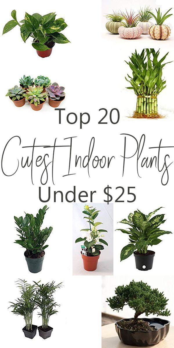 20 Affordable Indoor Plants That Will Make Your Home Beautiful