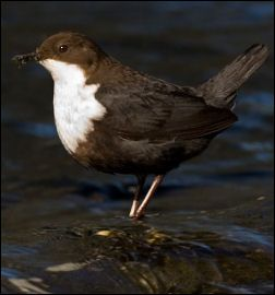 Norway - Bird Watching,Resources for Bird Watching by the Fat Birder
