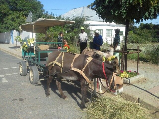 Willowmore Eastern Cape - Donkey car rides - Willow Limo