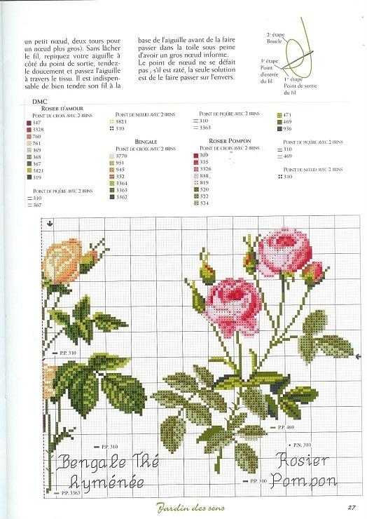 roses_1