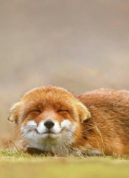 Fox - I mean just look at that face!