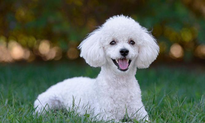Pin De Evangelina Ceceri En Perro Dogo Aleman Gran Danes Perro