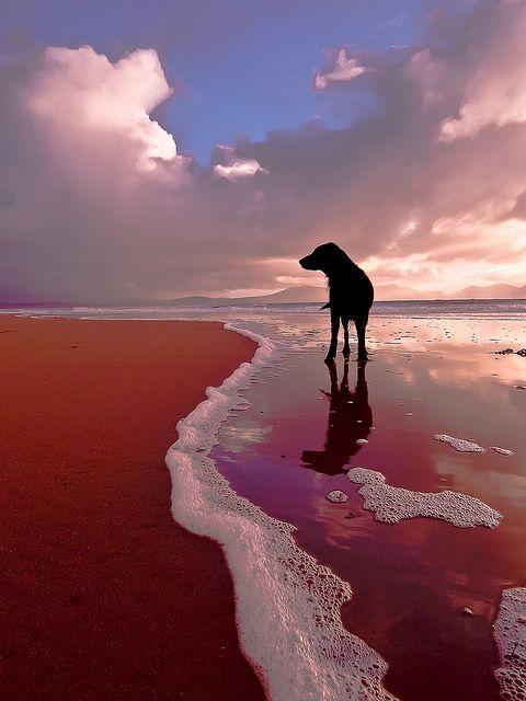 Seadog | Richard Williams