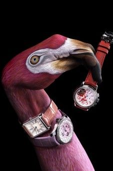 Stern Flamingo