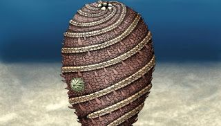 Η ΑΠΟΚΑΛΥΨΗ ΤΟΥ ΕΝΑΤΟΥ ΚΥΜΑΤΟΣ: Παράξενο πλάσμα 500 εκατομμυρίων ετών ανακαλύφθηκε...
