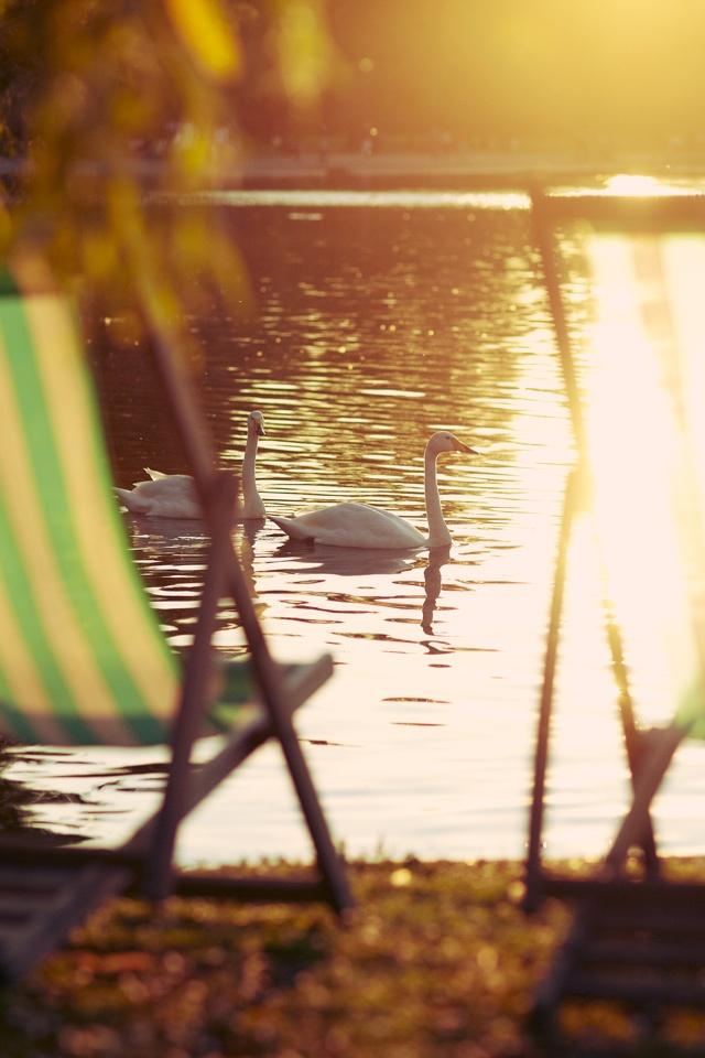 Evening sunlight in St James' Park, #London 19°C | 66°F #BurberryWeather