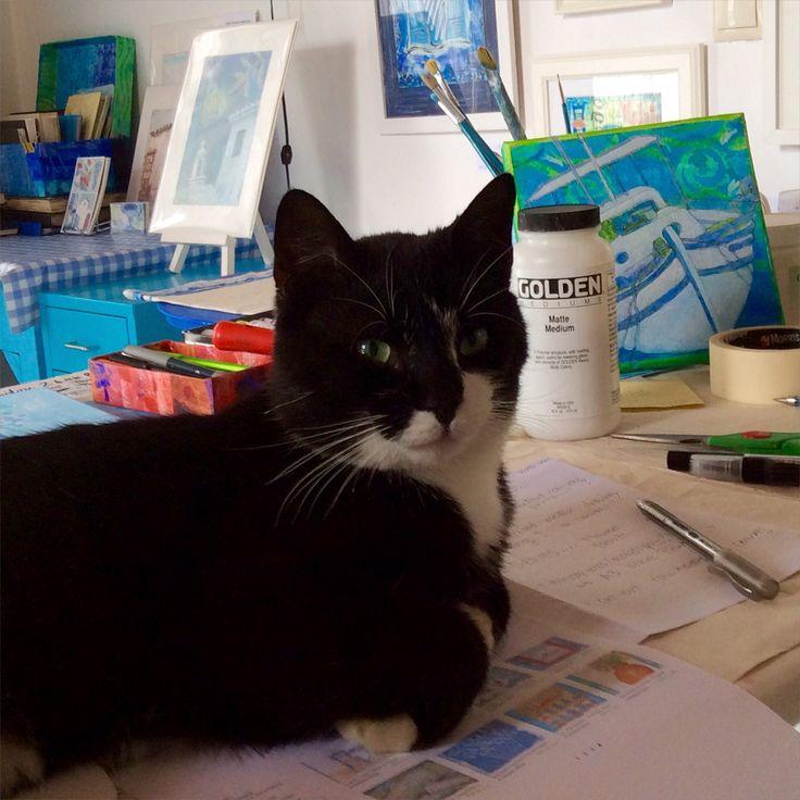 Horis - Studio Cat