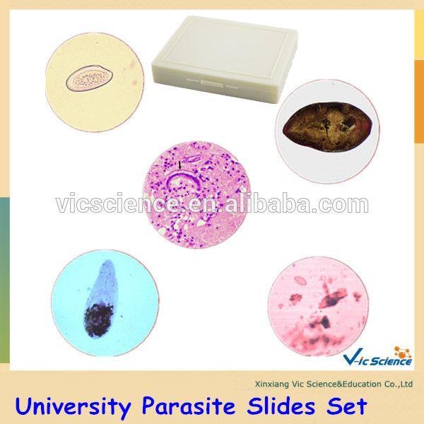 parasiten gegen menschen cdl bestellen.jpg