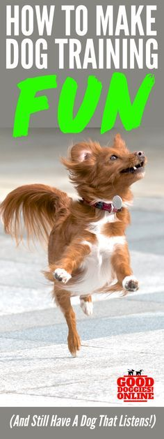 Dog training doesn't have to be boring! Check out these dog training tips to help you make it fun and still have a dog that listens and obeys. #dogs #dogtraining