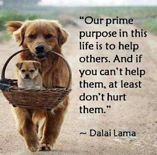 Our prime purpose in this life is to help others not hurt them.