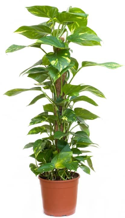 4 Powerful Air Purifying Plants to Clean the Air in Your Home – flowers
