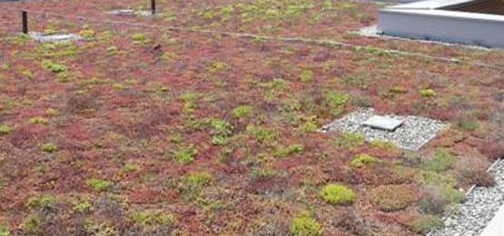 Grønne tak kan bidra til å redusere belastningen på avløpsnettet