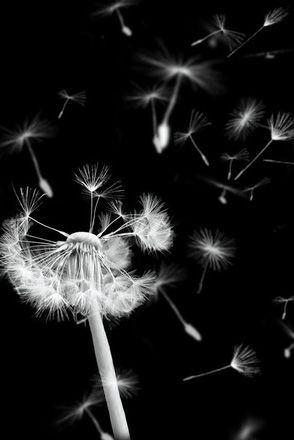 25 Besten Schwarz Weiß Fotografie