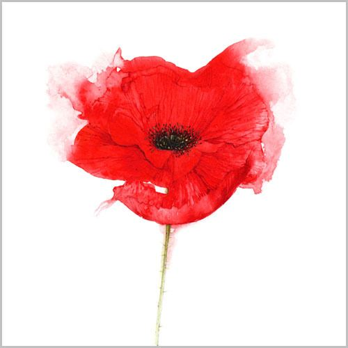 Watercolour Poppy tat idea?