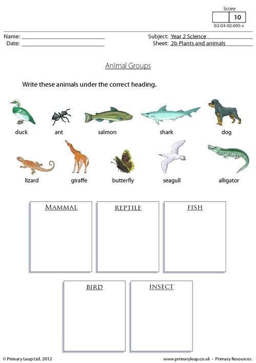 animal groups 1 worksheet science social studies pinterest anchor. Black Bedroom Furniture Sets. Home Design Ideas
