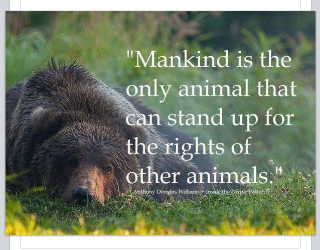 standing up against animal cruelty Lets stand together against animal crueltythey cant speak therefore we speak and stand up for.