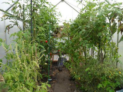 Dorthy's moestuin en meer: Puinruimen of tuinruimen.