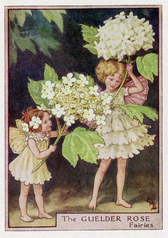Guelder Rose Flower Fairy Vintage Print, c.1950 Cicely Mary Barker Book Plate Illustration