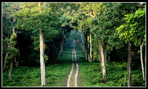 The rich resources of Nature is blooming with its all elements in Dooars,plan your trip with Rasoi Tour