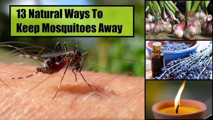 13 Natural Ways to Keep Mosquitoes Away - tutorials and how to's for DIY everything from bug spray to citronella candles. - from NaturalLivingIdeas.com