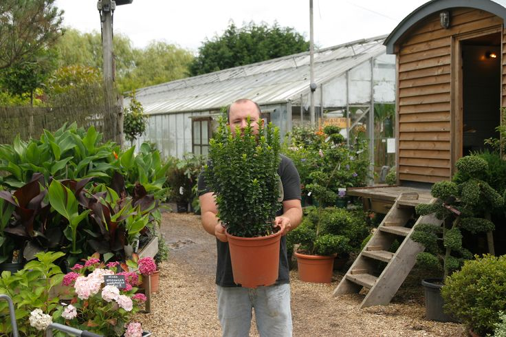 Euonymus japonicus 'Green Spire' is also known as Euonymus 'Green Rocket'. Deep green foliage with an upright, compact habit. Evergreen and particularly hardy, keeps its colour all year round. Ideal for low hedging or as a box hedge alternative.