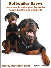 training all-things-puppy: Rescue Dogs, Training Rottweilers, Girls Generation, Bears, Training Allthingspuppi, Rottweilers Savvy, 5 Years, Animal Group, Rottweilers Happy