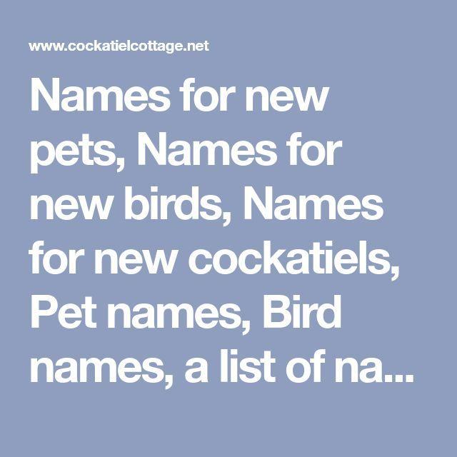 Names for new pets, Names for new birds, Names for new cockatiels, Pet names, Bi…  Names for new pets, Names for new birds, Names for new cockatiels, Pet names, Bird names, a list of names for your new pet and new bird, Cockatiel Names. Names for new pets, Names for new birds, Names for...