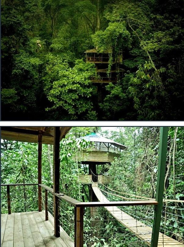 Finca Bellavista Treehouse Vacation - Costa Rica
