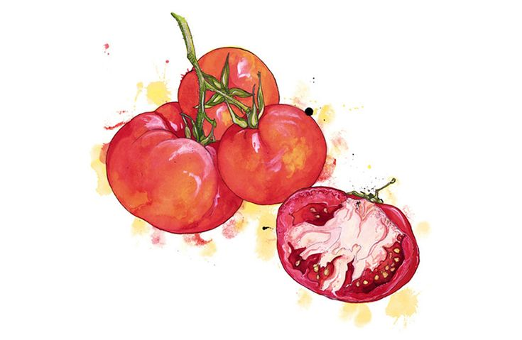 Illustration Inspiration - Tomato Tomahto