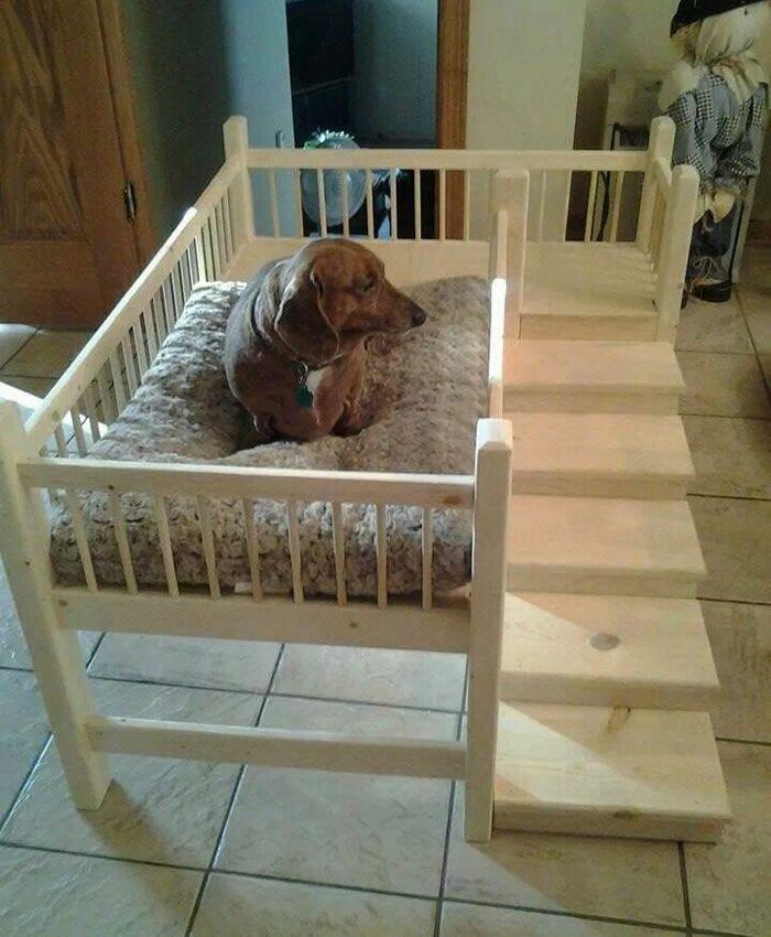 cama-de-cachorro_20                                                                                                                                                                                 Mais